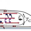 forceneuronalpolarization.png